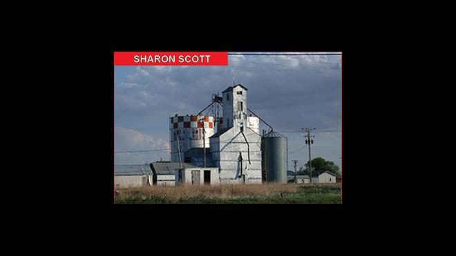 Sharon Scott - Community Columnist