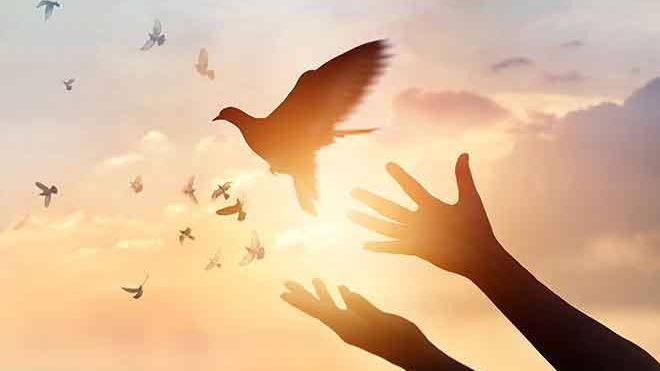 PROMO Faith - Dove Hands Sky Sun Silhouette - iStock - ipopba