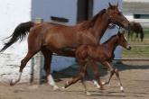 PROMO 660 x 440 Animal - Horse colt