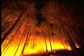PROMO 660 x 440 Fire - Forest Fire - Wikimedia