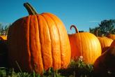 PROMO 660 x 440 Food - Pumpkins Hancock Shaker - Wikimedia