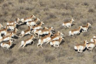 Colorado Parks seeking public comments on eastern Colorado pronghorn management