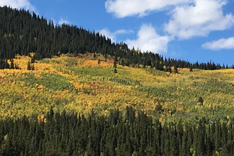 Colorado Parks promotes viewing of fall colors as trees begin annual change