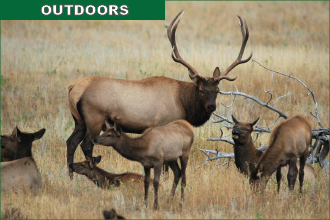 Elk Expeditions Set in Rocky Mountain National Park