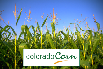 Colorado Corn Eager to Shed Light on Farmers' Innovative Conservation Efforts Through New Award
