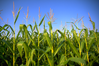 Colorado Corn District 7 meeting set for July 12 in Springfield
