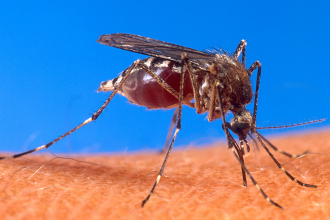 First human cases of West Nile virus reported for 2018; take precautions to avoid bites