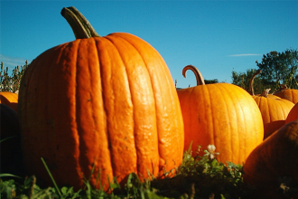 Fall fun: pumpkin farms in Colorado