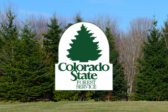 Girl Scouts of Colorado Provide 7,500 Trees for Forest Restoration