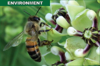 Protecting Pollinators Part 1 - Follow Thoughtful Landscape Management Guidelines