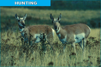 Hunting: Becoming a Real Straight Shooter