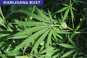 Charges Pending for Illegal Marijuana Grow