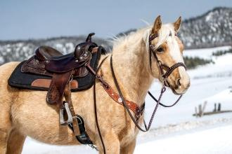 Horse-Riding Safety Tips for the Winter