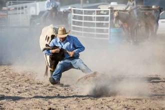 The 115th National Western Stock Show postponed until January 2022