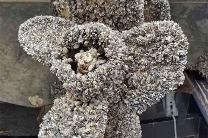 PICT Boat propeller infested with mussels - CPW