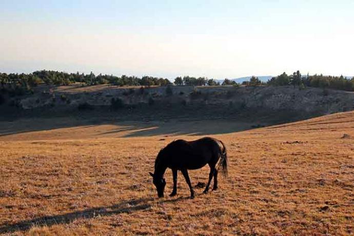 PROMO Animal - Horse Range Pasture Outdoor Bureau of Land Management BLM - iStock - htrnr