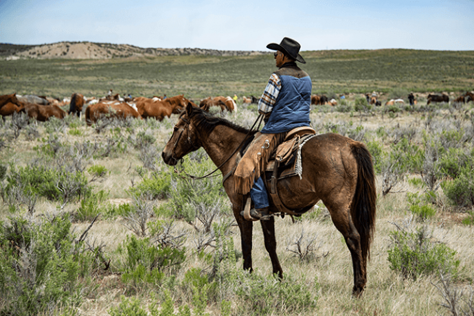 PROMO 64S Agriculture - Horse Cattle Prairie Rancher - iStock - WestwindPhoto