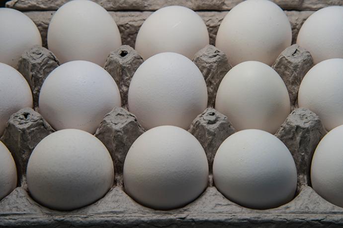 PROMO 660 x 440 Animal - Chicken Eggs Carton - wikimedia