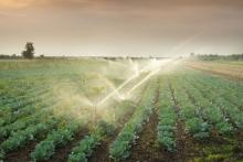 3 Ways to Improve Irrigation Efficiency and Increase Yields