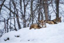 Best Animals To Hunt During the Winter