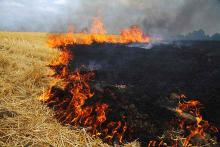 PROMO Fire - Wheat Stubble Soot Flames - iStock