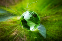 PROMO 660 x 440 Environment - Globe Grass Green Leaves - iStock