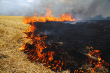 PROMO 660 x 440 Fire - Wheat Stubble Soot Flames - iStock