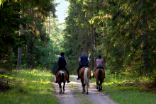 PROMO 660 x 440 Outdoors - Recreation Horseback Riding People Forest Trail - iStock - amaxim