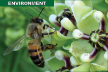 Environment - Bees and Pollinators