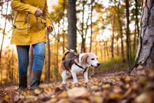 Keeping your dog safe outdoors all year long