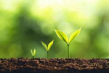 PROMO 64J1 Agriculture - Column Sowing Seeds Plant Growth Soil Green - iStock - ArtRachen01