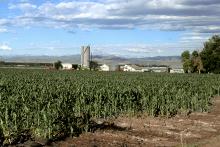 PROMO 660 x 440 Agriculture - Landscape Corn Field Farm Silo Larimer County - wikimedia - USDA ARS - public domain