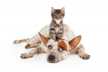 PROMO 660 x 440 Animal - Pets Dog Cat Pet Care - iStock - adogslifephoto